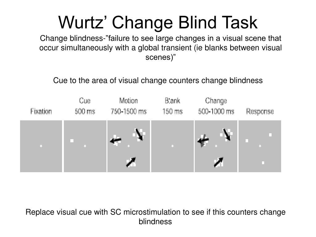 Wurtz' Change Blind Task