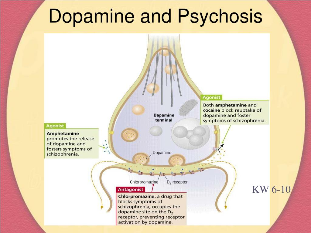 Dopamine and Psychosis