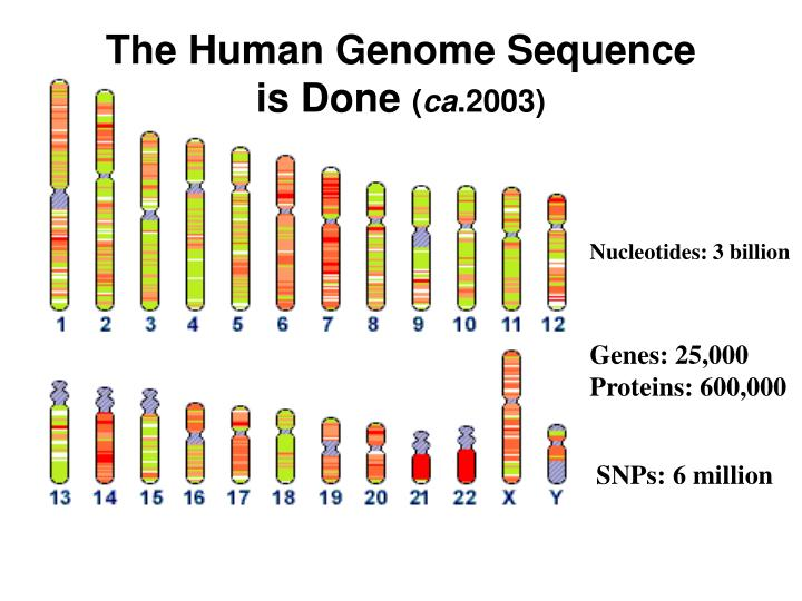 The Human Genome Sequence