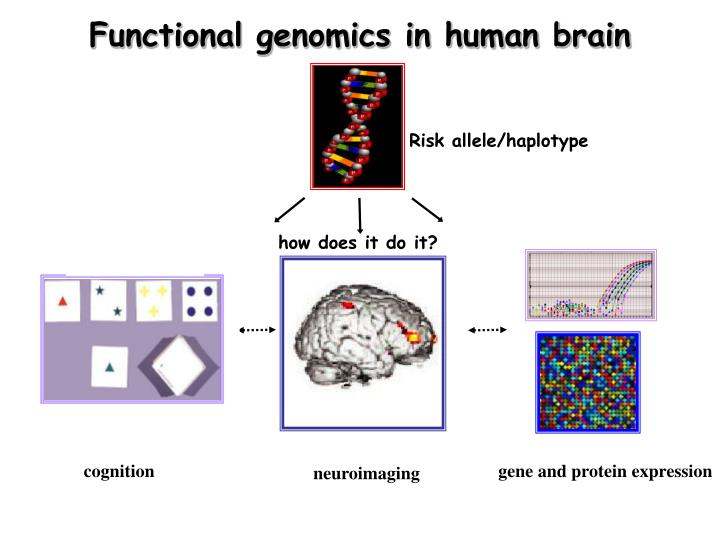 Functional genomics in human brain
