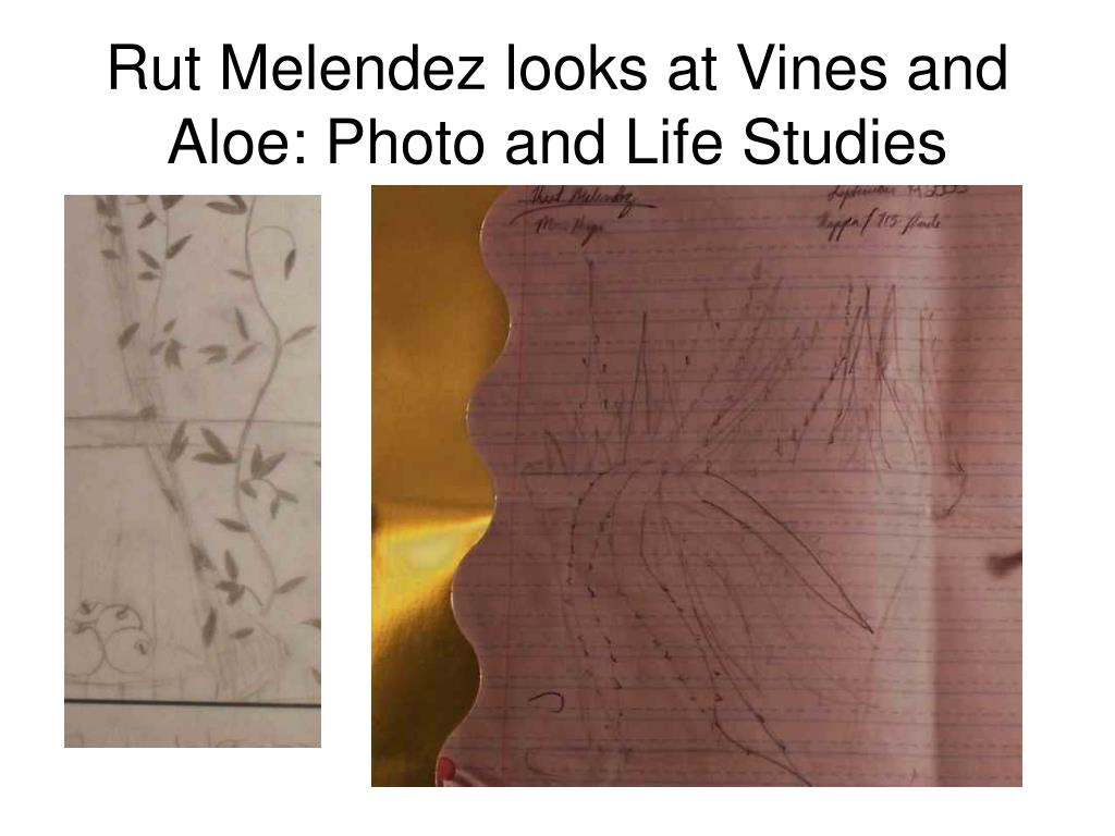 Rut Melendez looks at Vines and Aloe: Photo and Life Studies