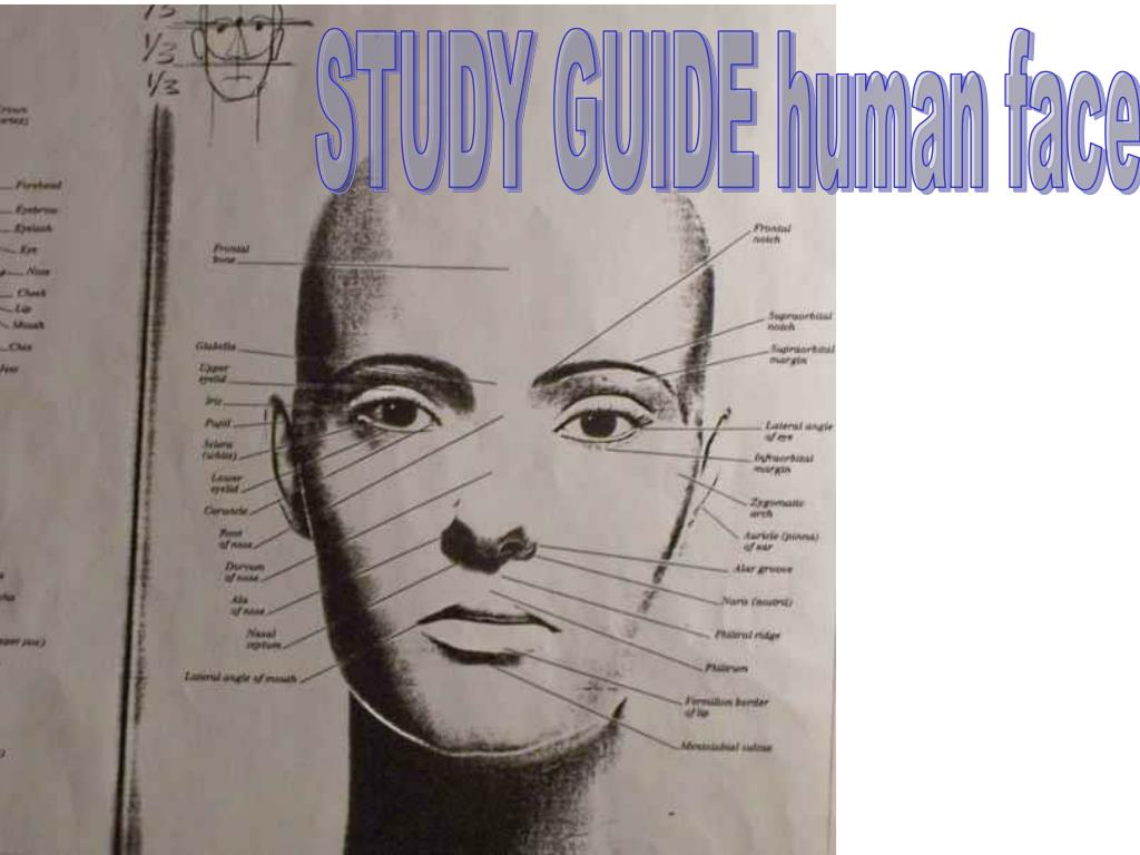 STUDY GUIDE human face