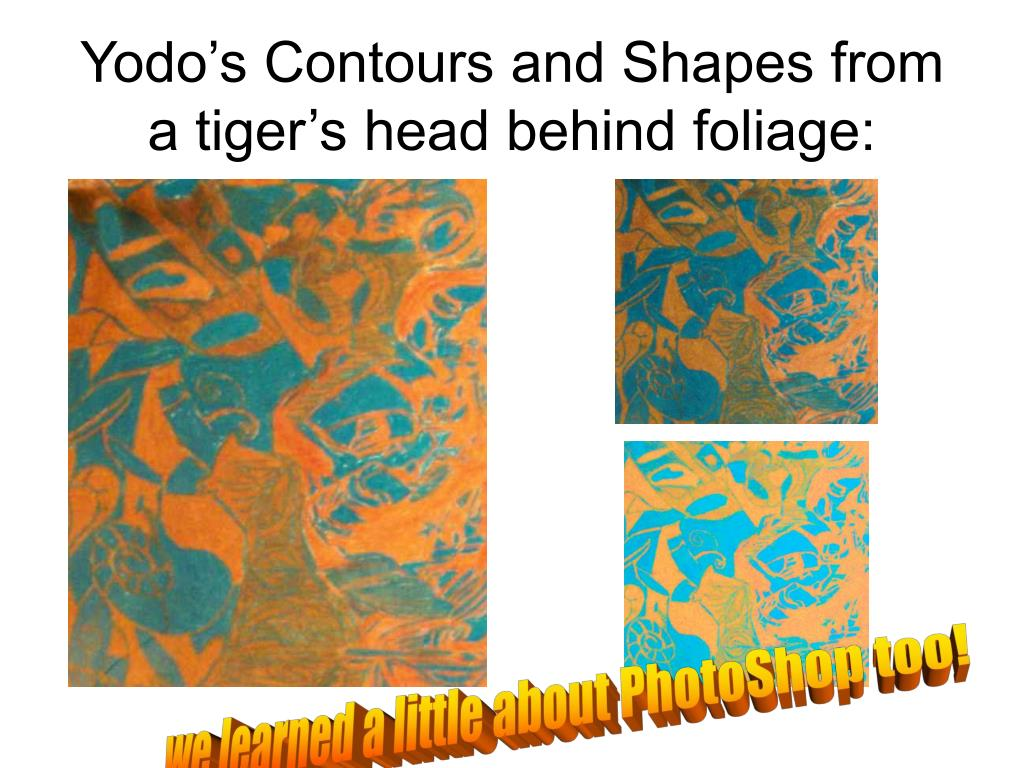Yodo's Contours and Shapes from a tiger's head behind foliage: