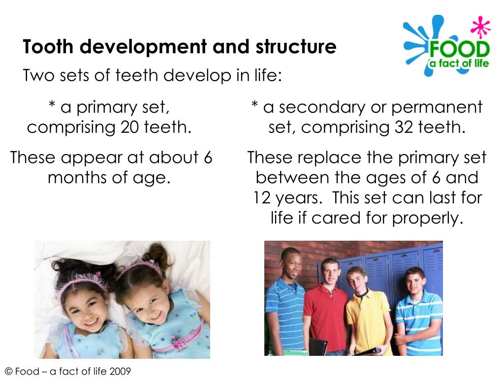 Tooth development and structure