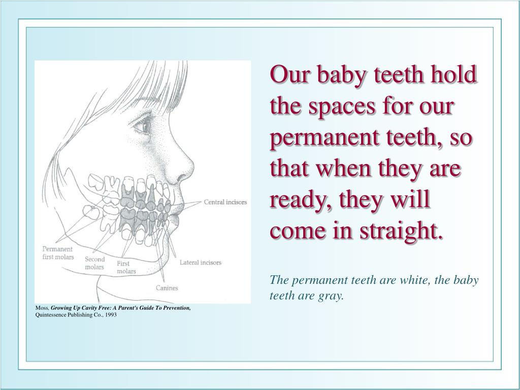 Our baby teeth hold the spaces for our permanent teeth, so that when they are ready, they will come in straight.