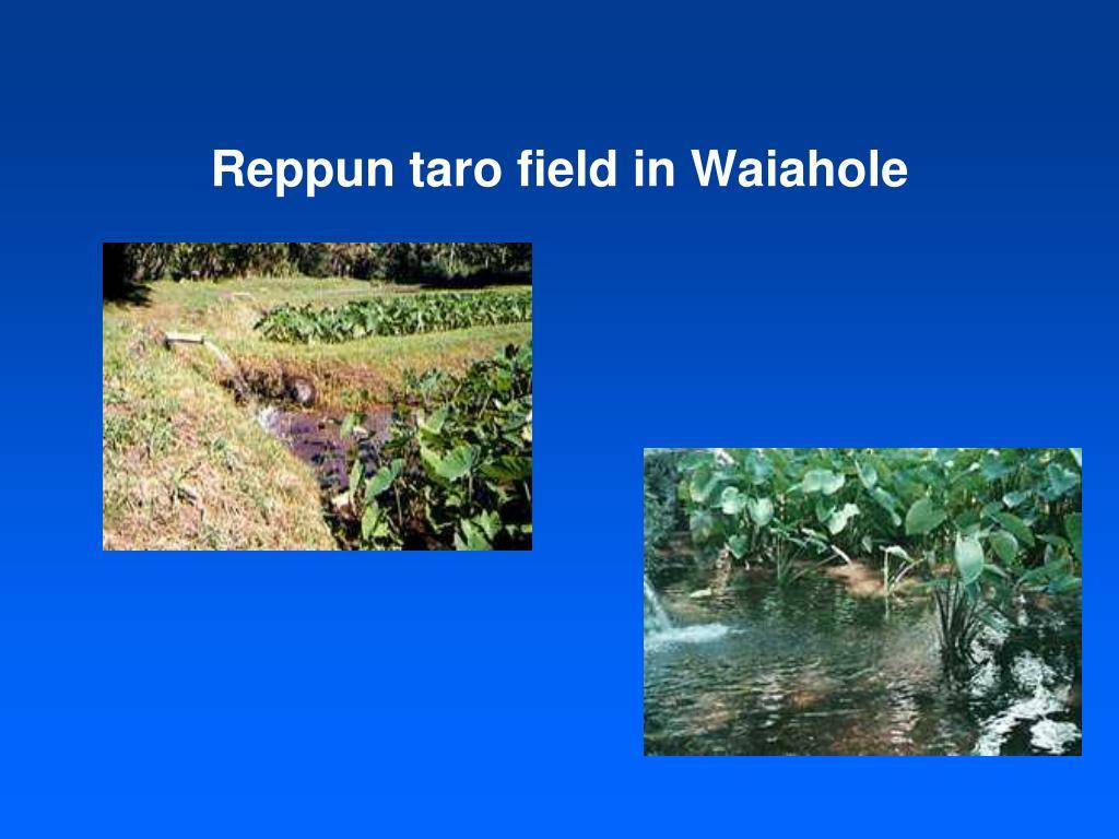 Reppun taro field in Waiahole