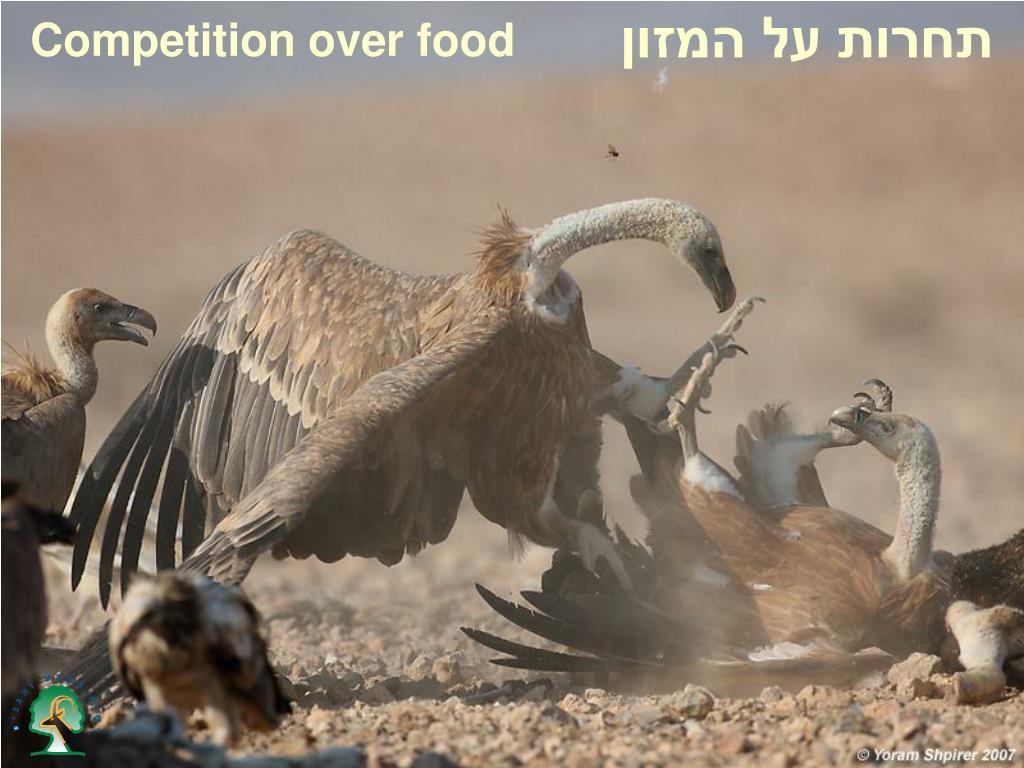 תחרות על המזון