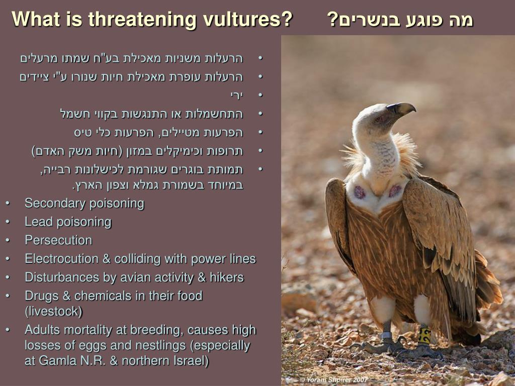 מה פוגע בנשרים?
