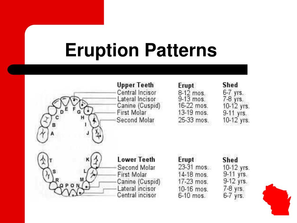 Eruption Patterns