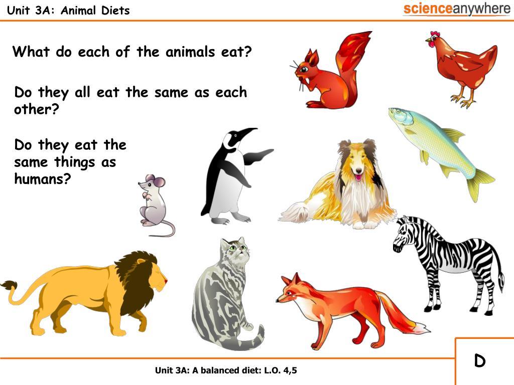 Unit 3A: Animal Diets