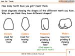 unit 3a teeth