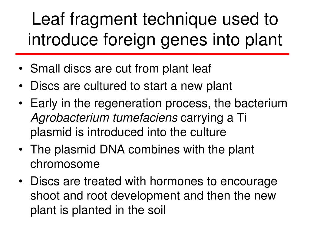 Leaf fragment technique used to introduce foreign genes into plant