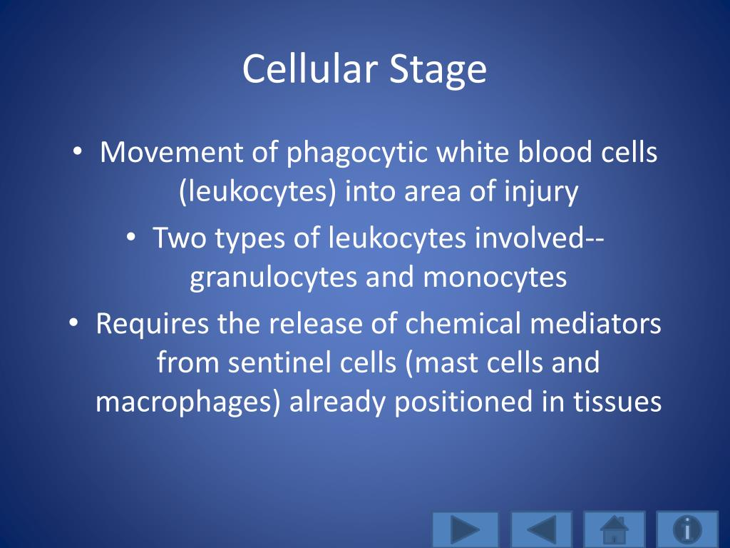 Cellular Stage