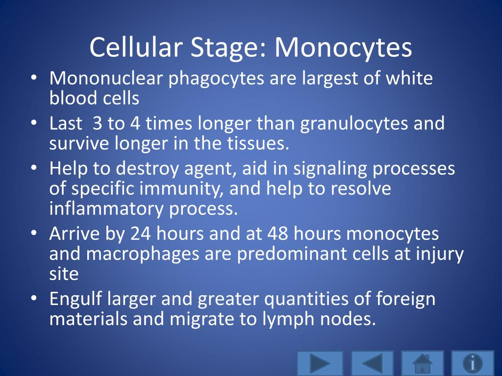 Cellular Stage: Monocytes
