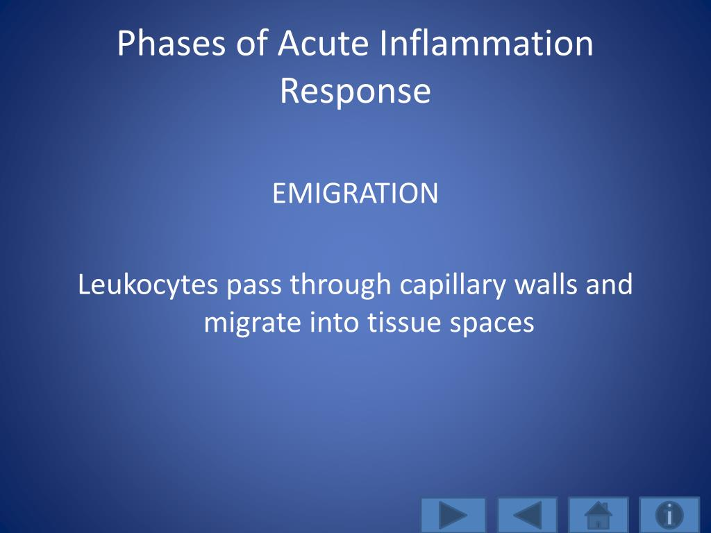 Phases of Acute Inflammation Response
