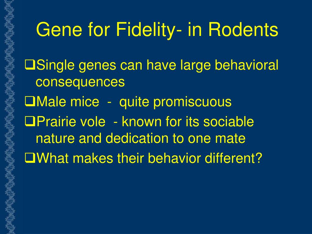 Gene for Fidelity- in Rodents