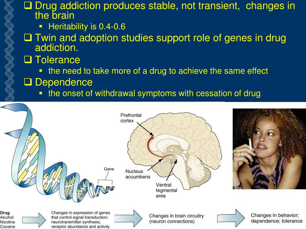 Drug addiction produces stable, not transient,  changes in the brain
