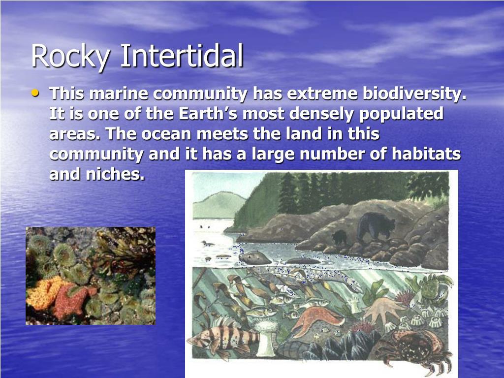 Rocky Intertidal
