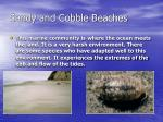 sandy and cobble beaches