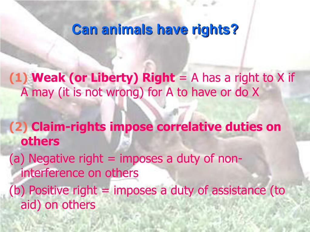 Can animals have rights?