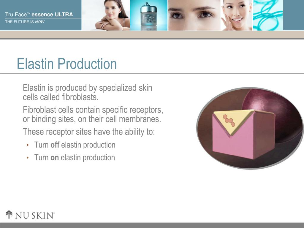 Elastin Production