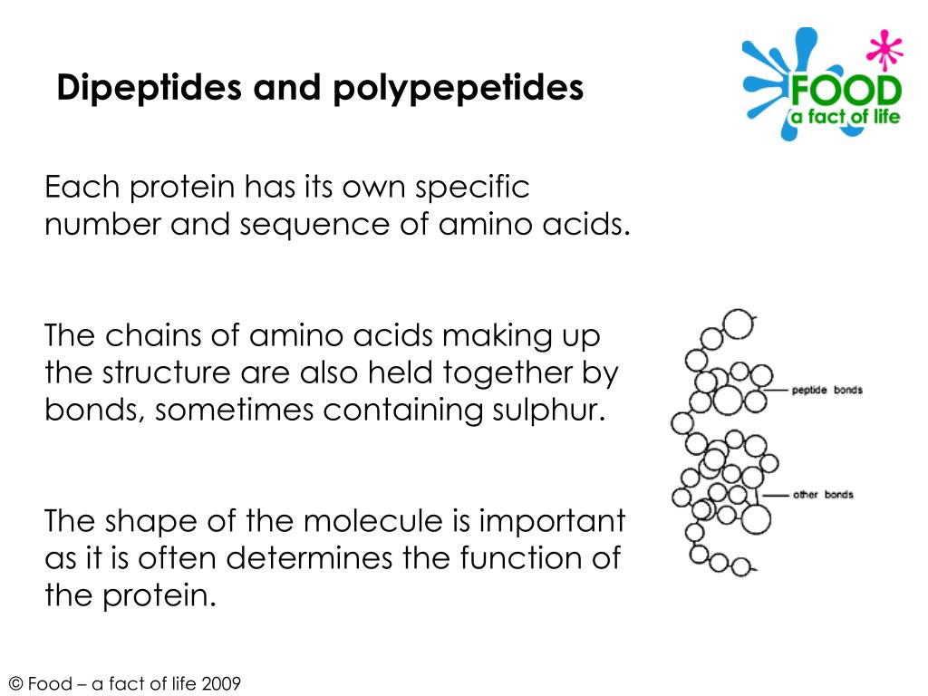 Dipeptides and polypepetides