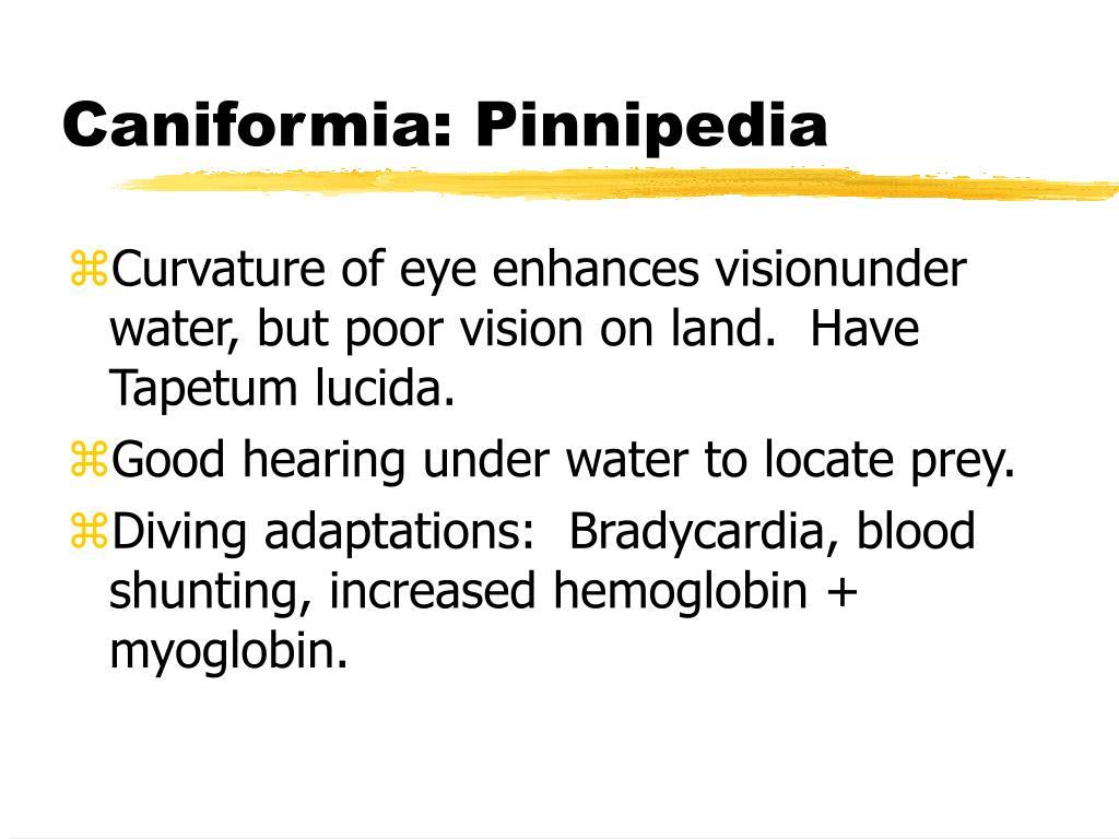 Caniformia: Pinnipedia