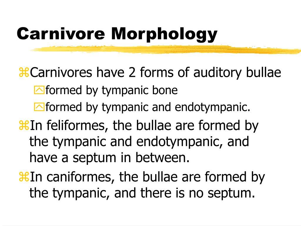Carnivore Morphology