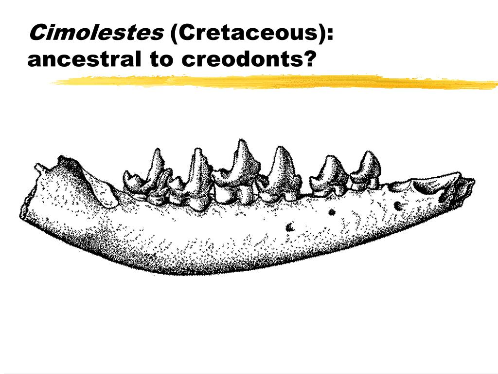 Cimolestes