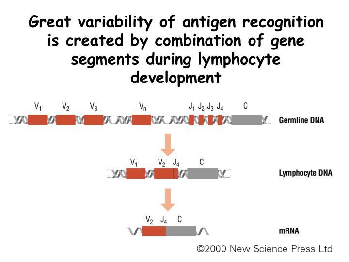 cellular and molecular immunology pdf