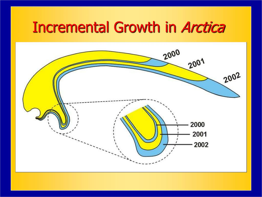 Incremental Growth in