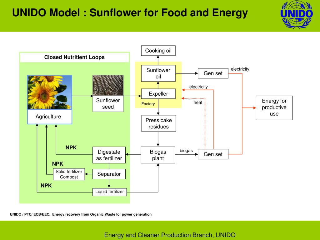 UNIDO Model : Sunflower for Food and Energy