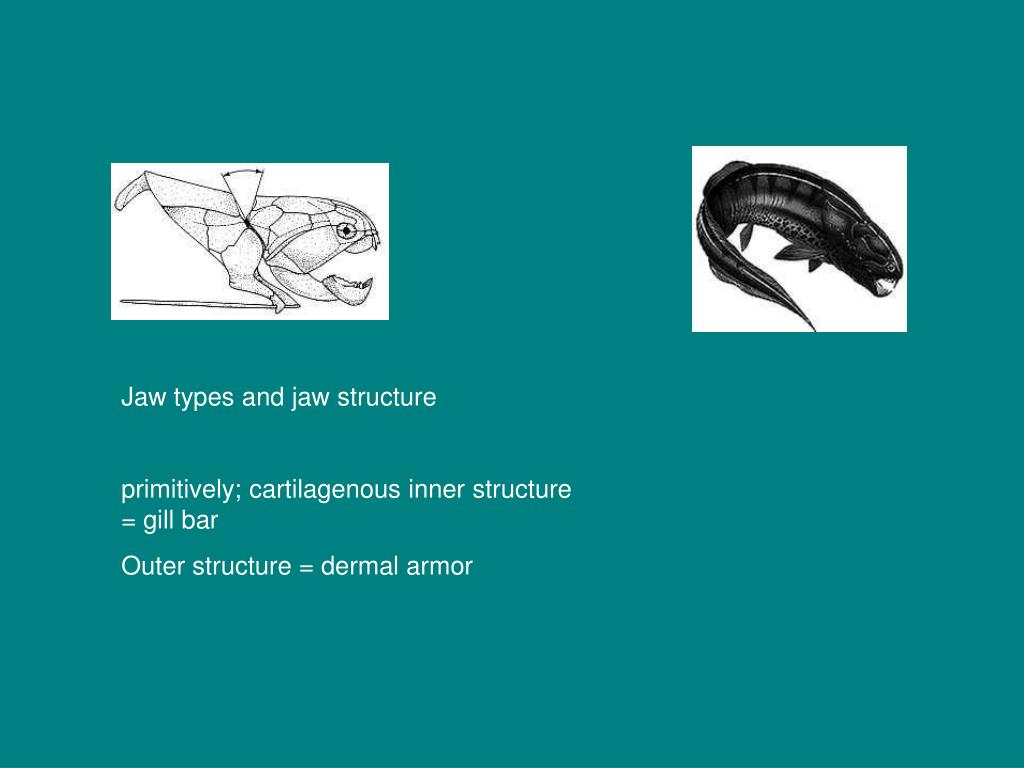 Jaw types and jaw structure