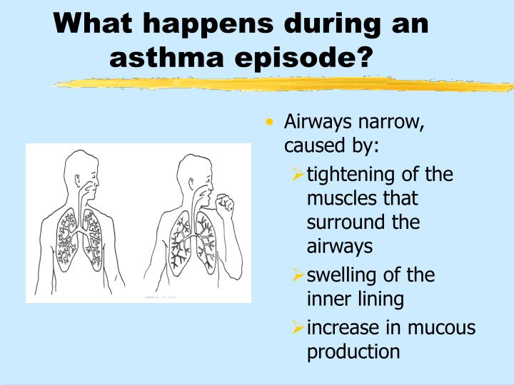 What happens during an asthma episode?