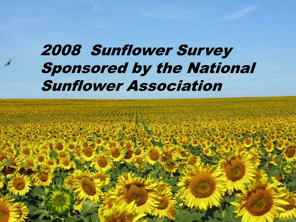 2008  Sunflower Survey Sponsored by the National Sunflower Association