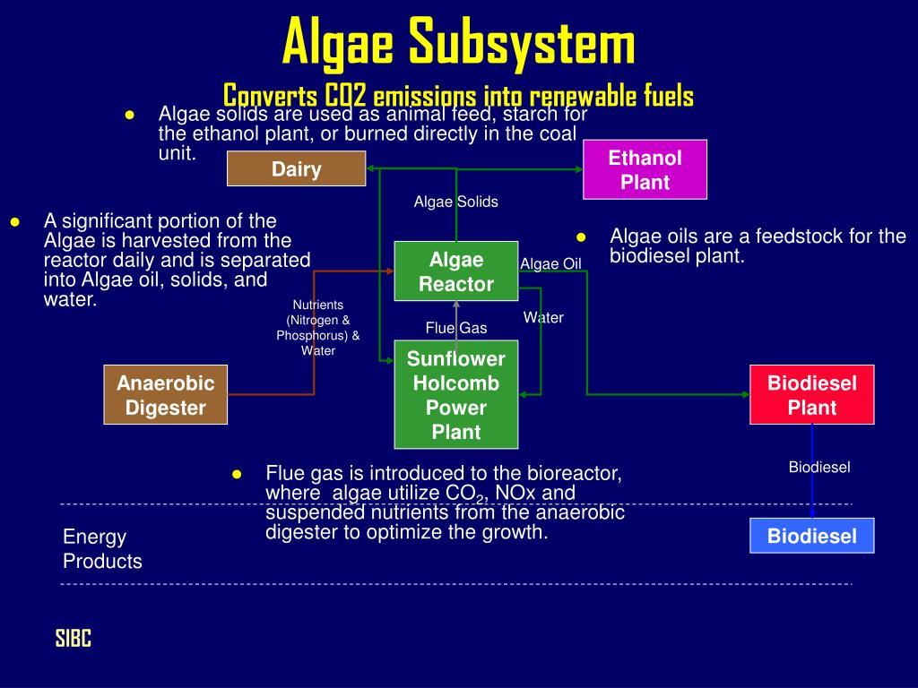 Algae Subsystem