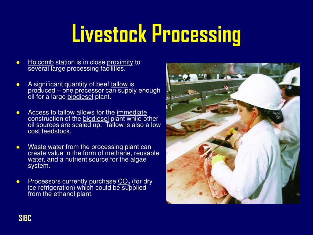 Livestock Processing