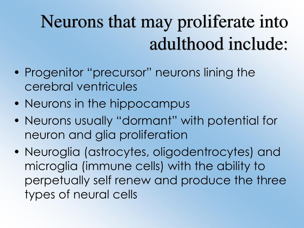 Neurons that may proliferate into adulthood include: