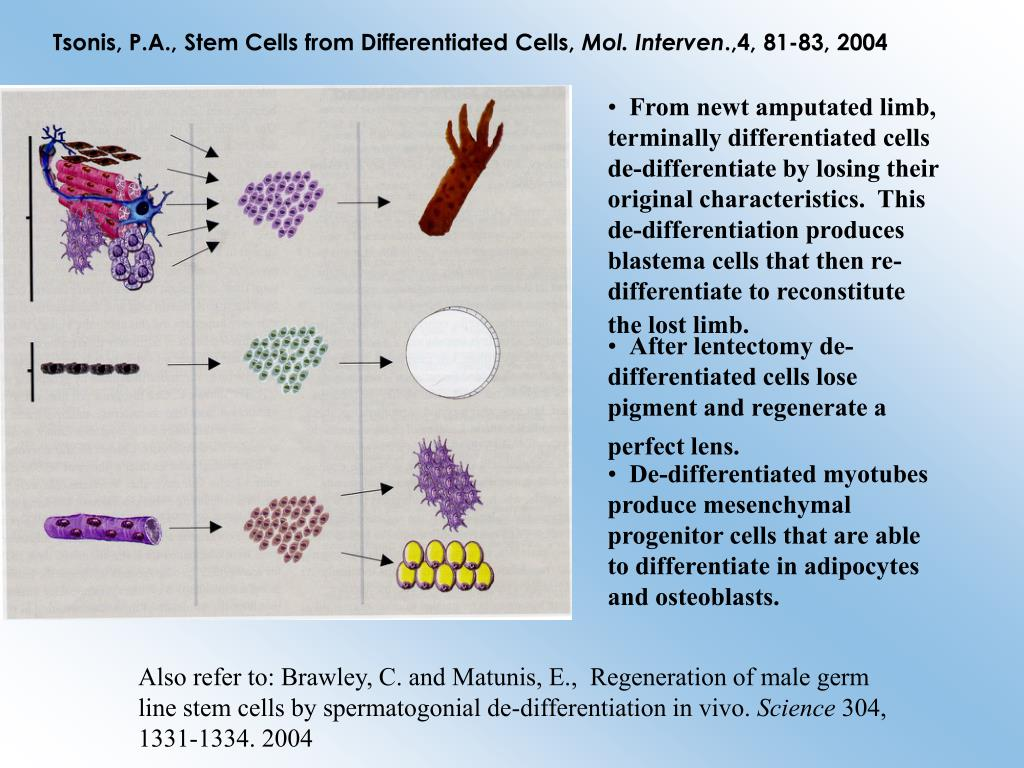 Tsonis, P.A., Stem Cells from Differentiated Cells,
