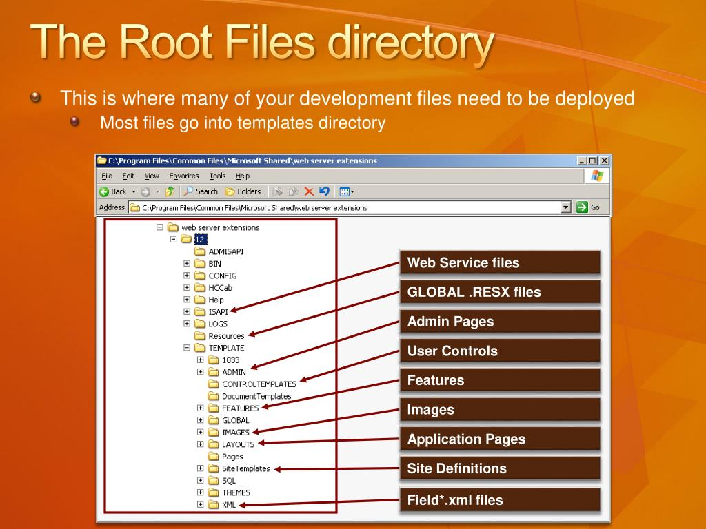 The Root Files directory