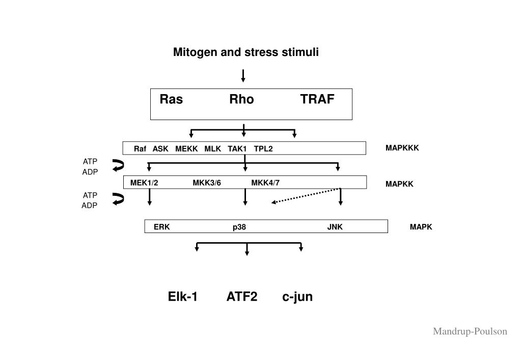 Mitogen and stress stimuli