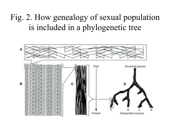Fig 2 how genealogy of sexual population is included in a phylogenetic tree l.jpg