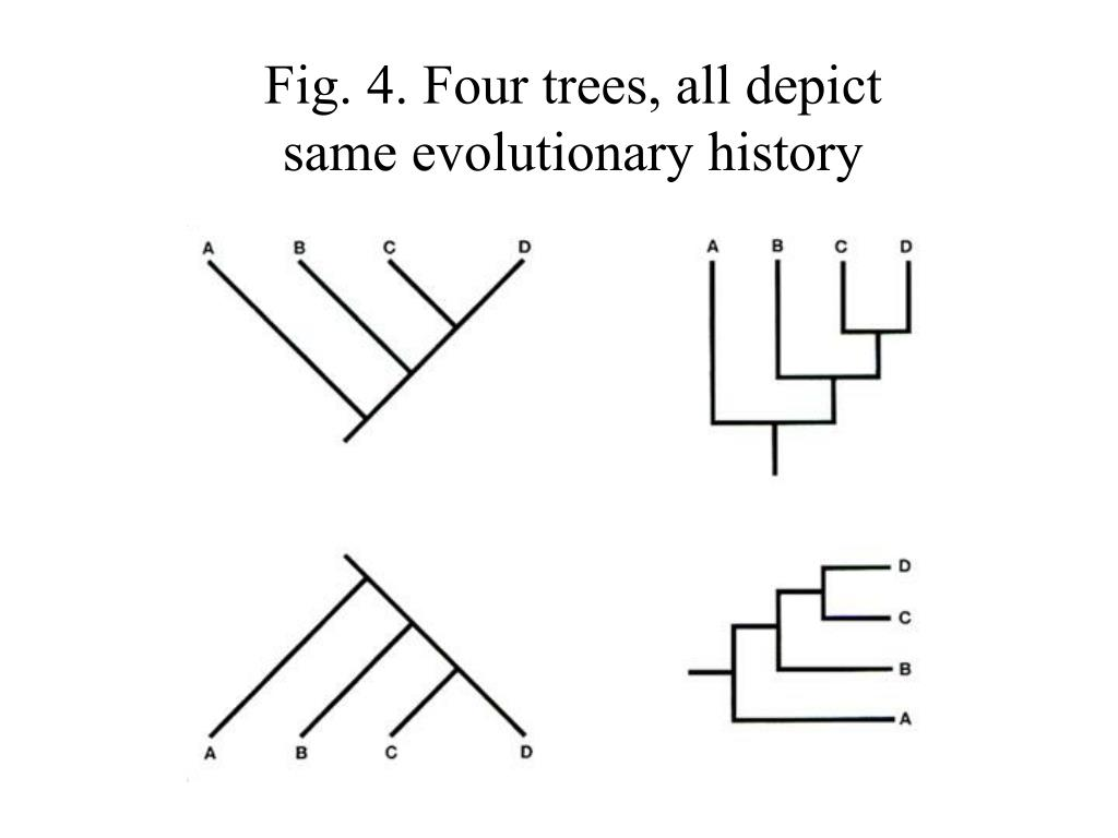 Fig. 4. Four trees, all depict