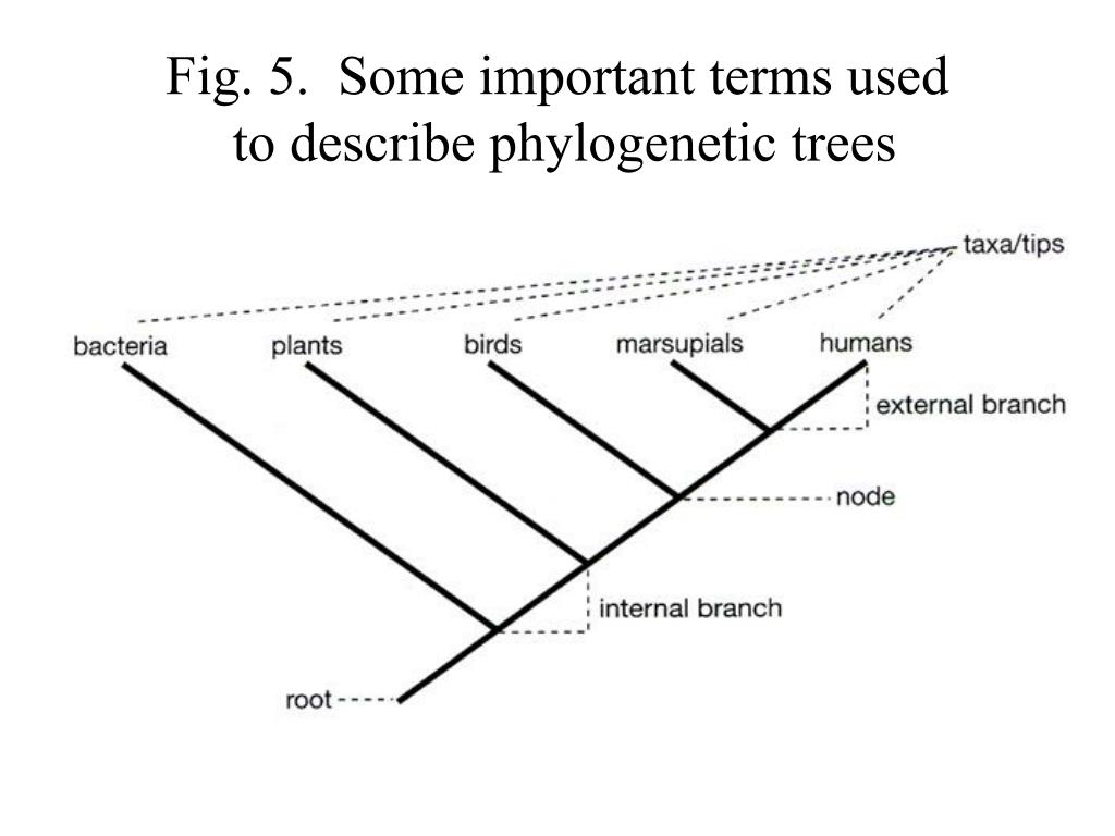 Fig. 5.  Some important terms used
