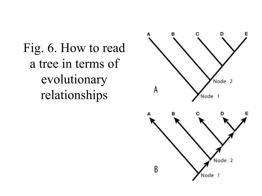 Fig. 6. How to read a tree in terms of