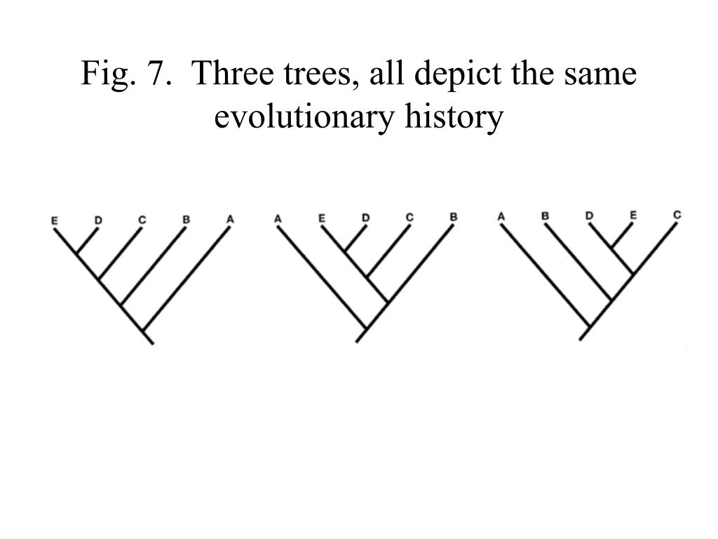 Fig. 7.  Three trees, all depict the same