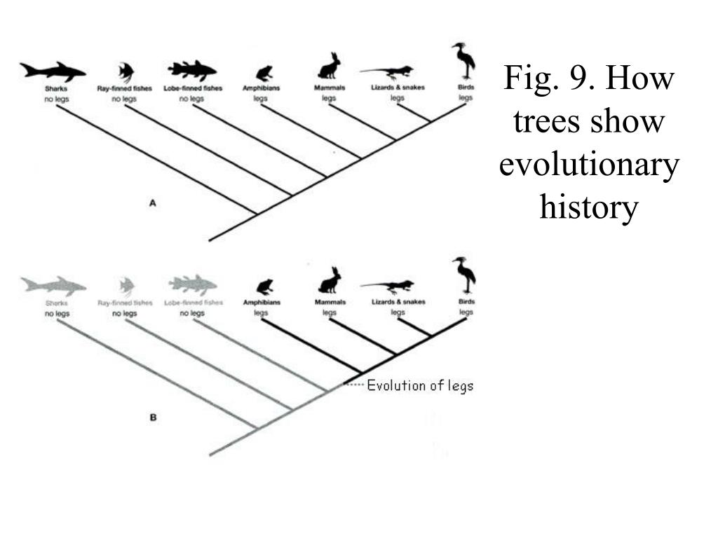 Fig. 9. How trees show evolutionary history