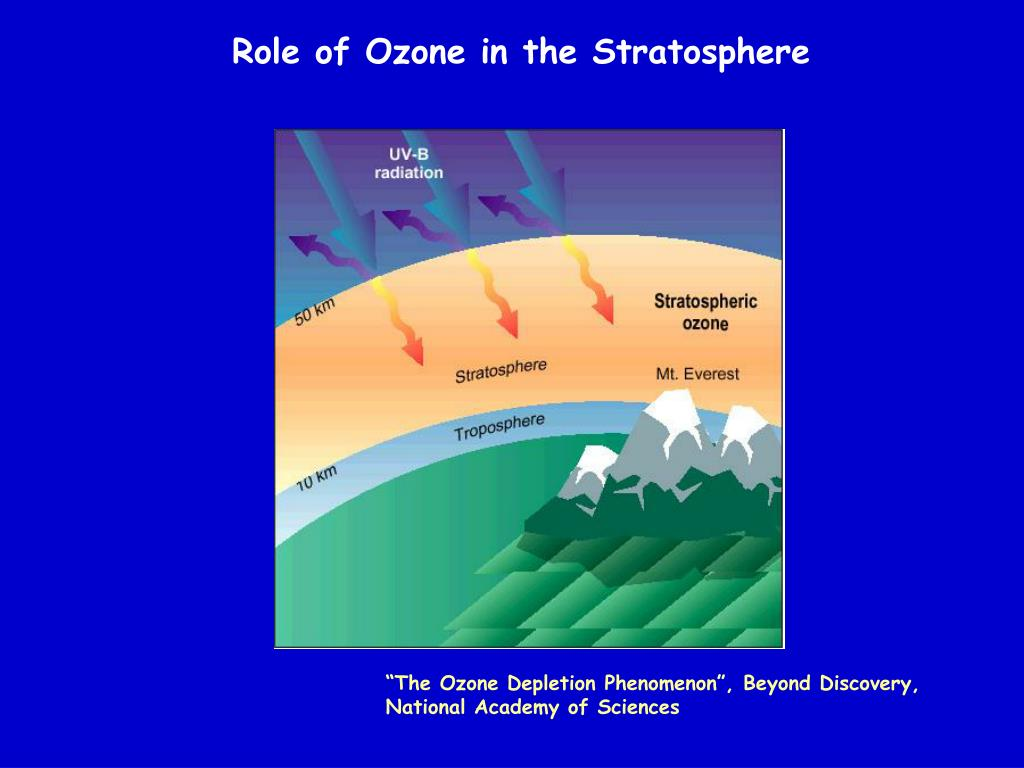 Role of Ozone in the Stratosphere