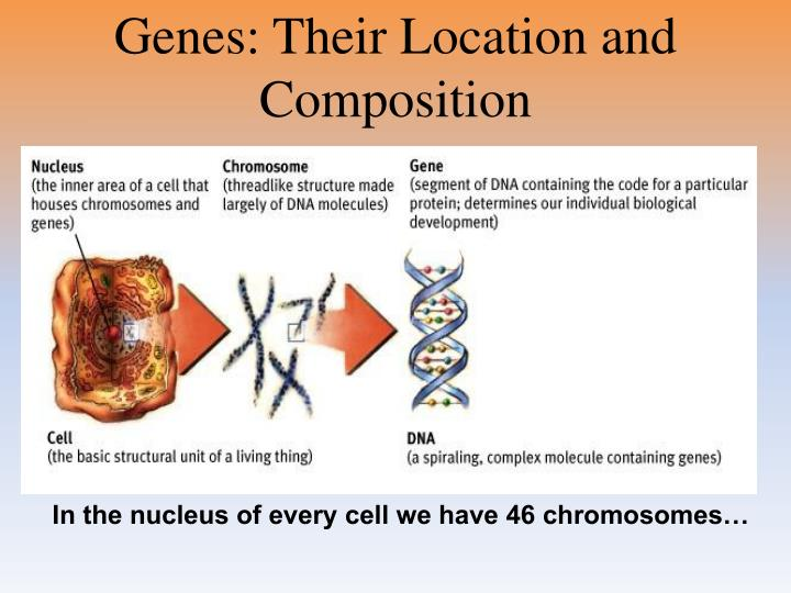 Genes: Their Location and Composition