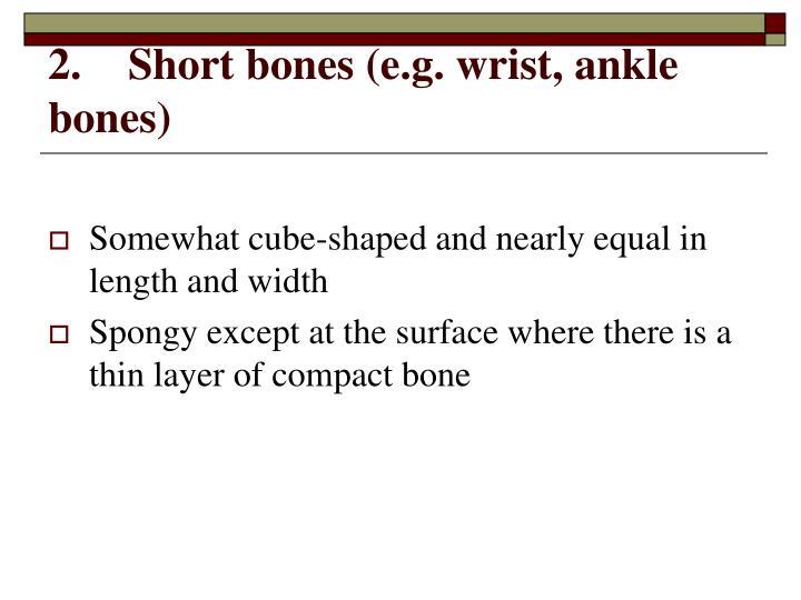 2.Short bones (e.g. wrist, ankle bones)